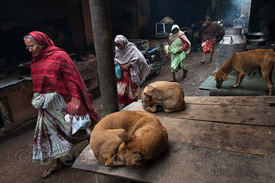 Dogs sleeping on a sidestreet full of sweets makers, Pushkar, Rajasthan, India