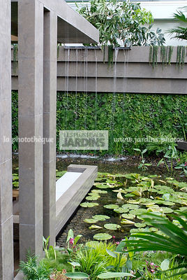 Contemporary garden, Exotic garden, Garden construction, Tropical garden, Water garden, Foliage wall, Green wall, Vegetation ...