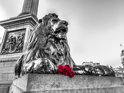 Statue of Lion with bunch of Roses at Trafalgar Square, London, UK