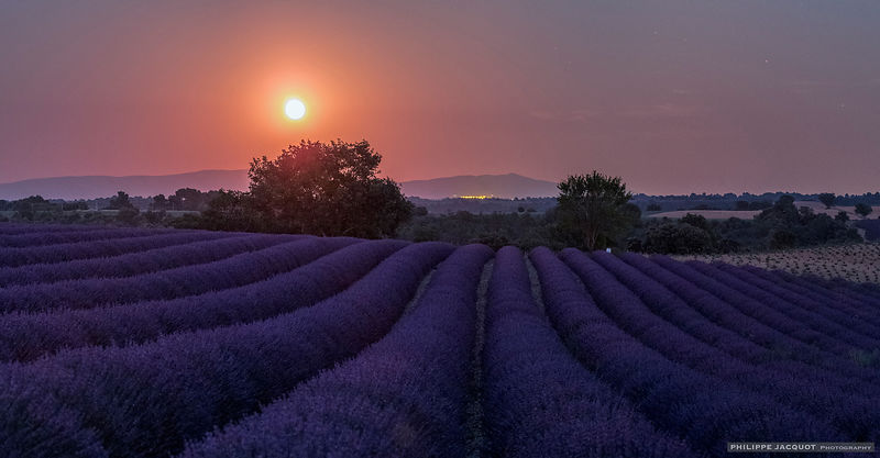 Moonrise on a lavender field - Valensole - Alpes Haute Provence