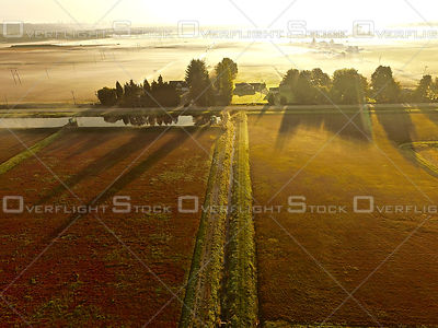 Cranberry Farm Fields at Harvest Richmond BC