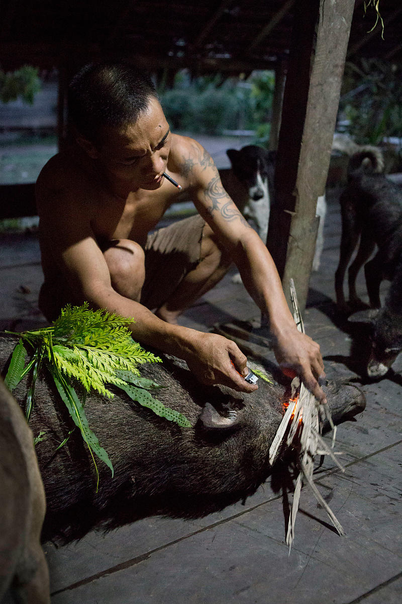Man performing a ritual after killing a wild pig with 3 dogs and a spear. He asks the spirits not to be able to kill the next...
