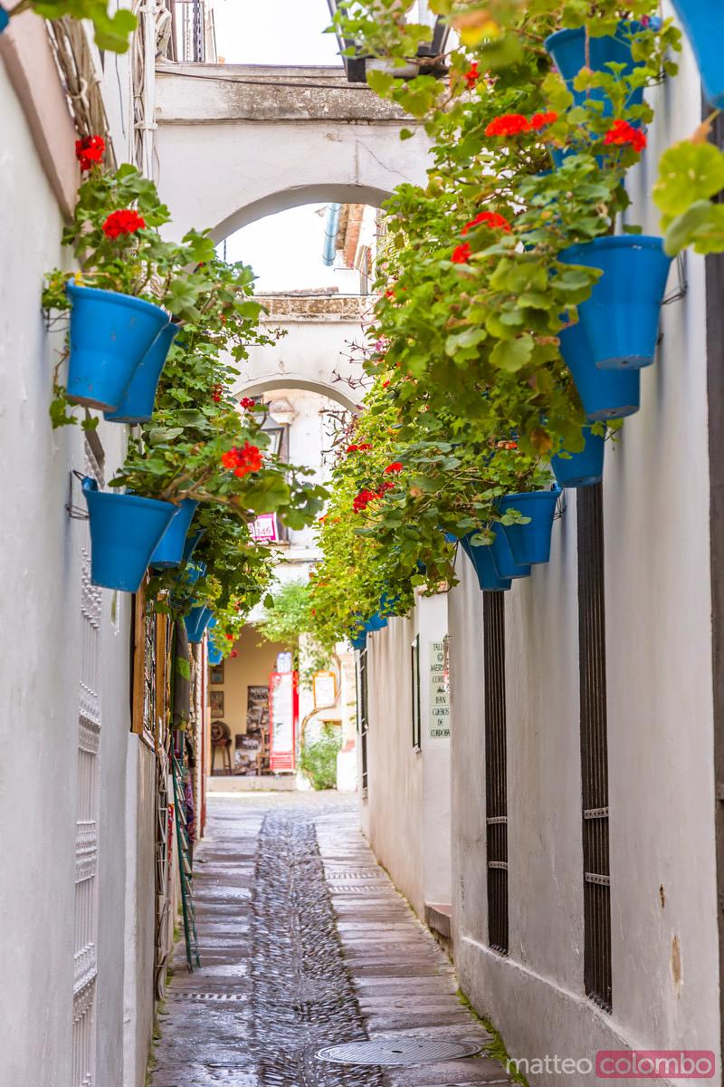 Alley with walls decorated with flowers, Cordoba, Andalusia, Spain