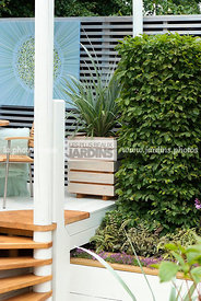 garden designer, Terrace, Contemporary Terrace, Digital, Silver spear