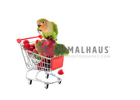 Peach-Faced Lovebird Perched on Shopping Cart filled with Fresh Fruit and Vegetables.