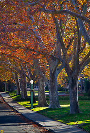 Fall Collors in Midtown Sacramento #5
