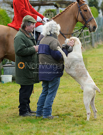 Hound-love at the meet - The Cottesmore Hunt at Castle Bytham