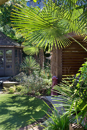 Trachycarpus fortunei (Chusan palms) overhanging hot tub enclosure and artificial lawn