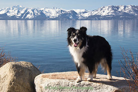 Lake Tahoe Merlin