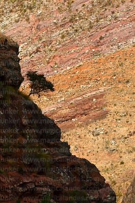 Silhouetted bush on rocky hillside, Torotoro National Park, Bolivia