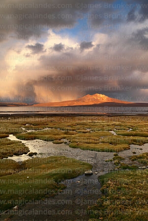 Bofedales on shore of Lake Chungará and last light on Cerro Quisi Quisini shortly before sunset, Lauca National Park, Region ...