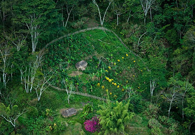 Aerial view of huts and enclosed garden, Papua New Guinea, August 2007