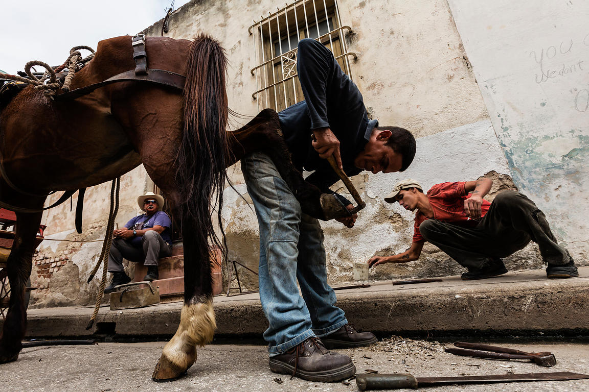 Man Changing a Shoe on a Horse