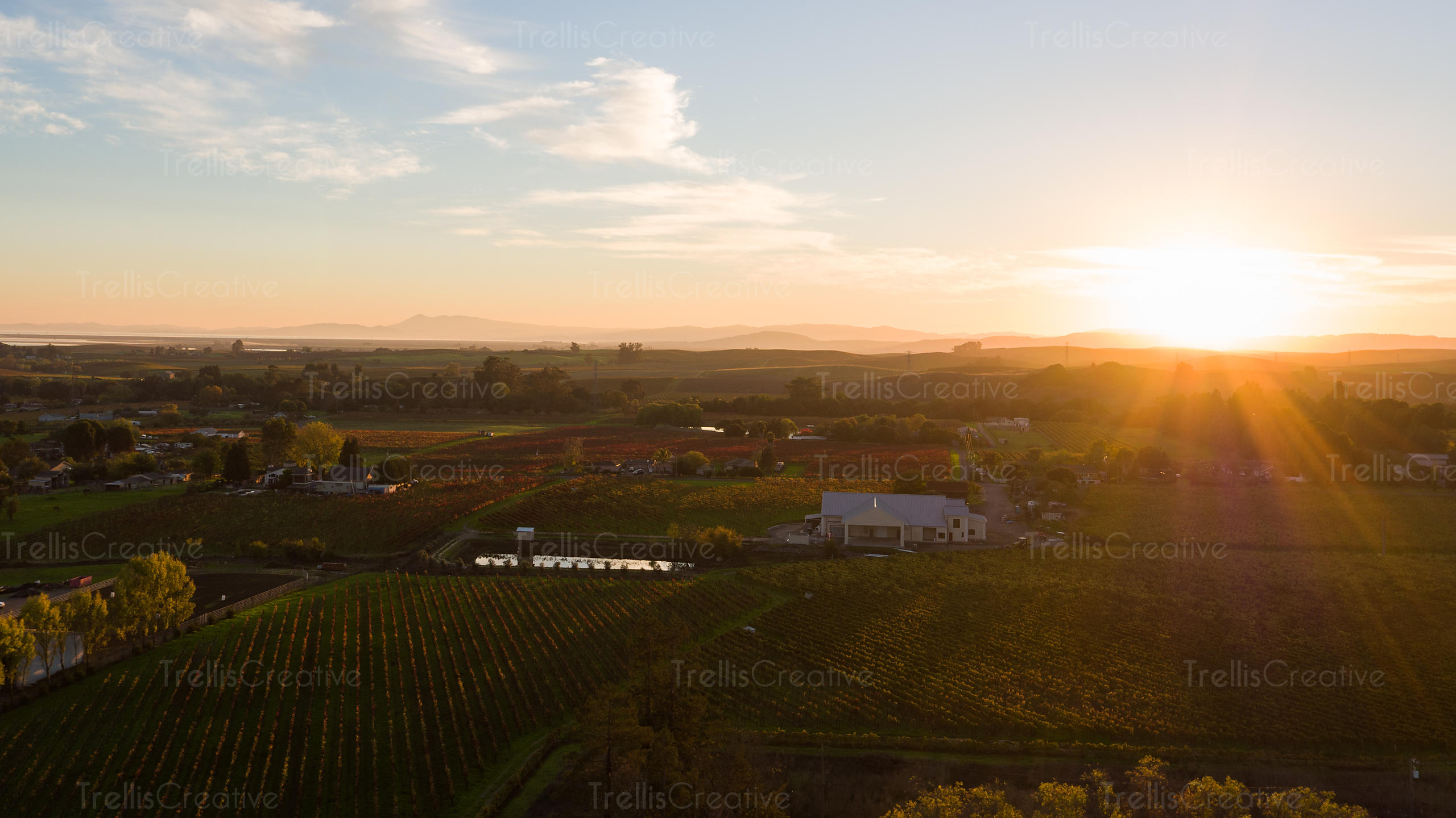 Aerial shot of dusk in the autumn season over a vinyard