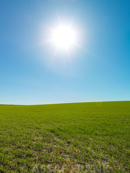 Clear blue sky with sun over green field