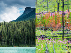 Alberta Canada for Lonely Planet magazine