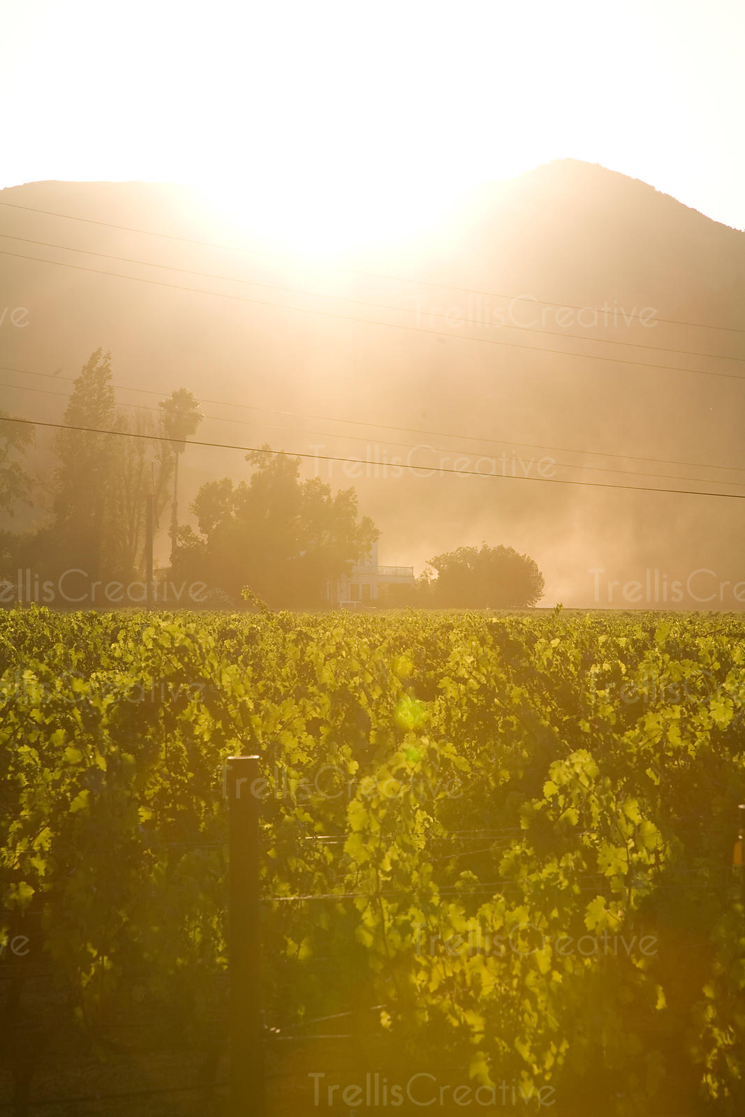 Looking across the valley floor as the sun sets behind Mount Veeder in Napa Valley, California