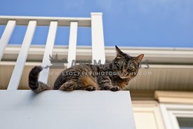 cat outside on balcony with blue sky