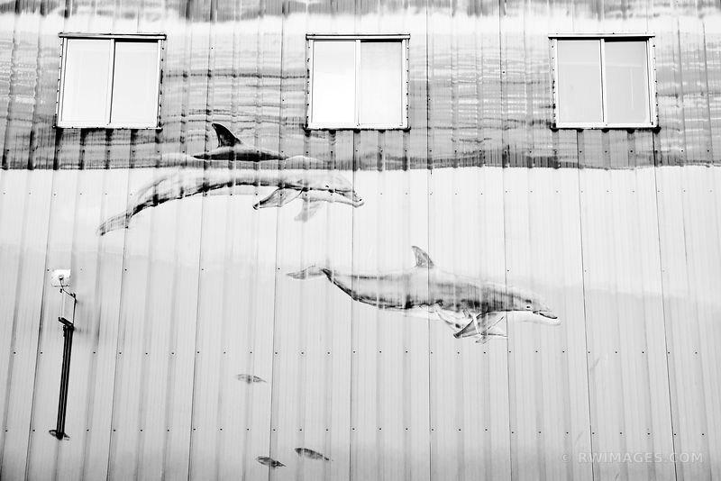 TWO DOLPHINS PORTLAND MAINE BLACK AND WHITE