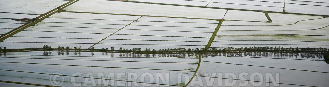 Aerial Photo, Rice Farming, Louisiana