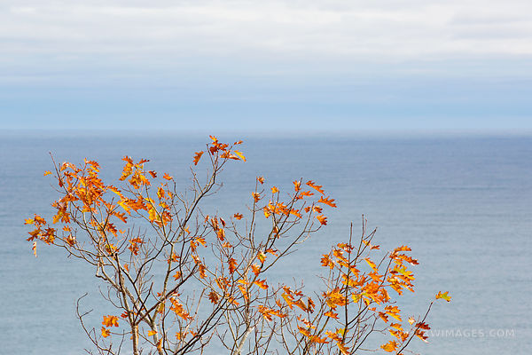FALL FOLIAGE AND THE OCEAN ACADIA NATIONAL PARK MAINE