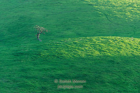 Lone Tree, Evergreen Hills, San Jose, CA, USA