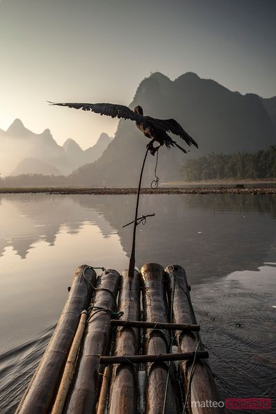 Cormorant on bamboo raft, LI river, China
