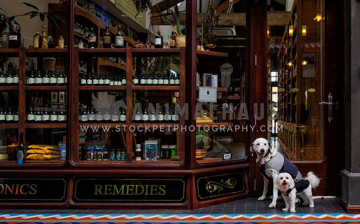 two dogs waiting in pharmacy doorway