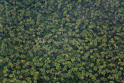 Aerial view of tropical rainforest tree canopy, near Rio Yavari, Amazonia, Peru
