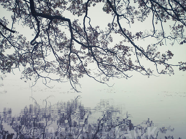 Branches reflection in a lake