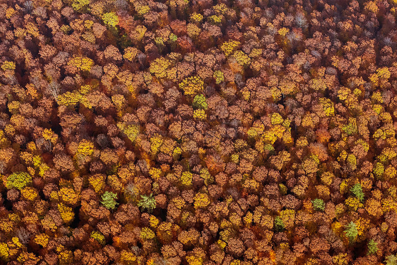 Aerial view of mixed forest in autumn colors, Spessart, Germany, October 2015.