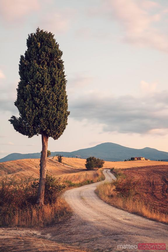 Rural road with cypress tree in Tuscany, Italy
