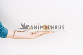 woman holding pet rat on white background