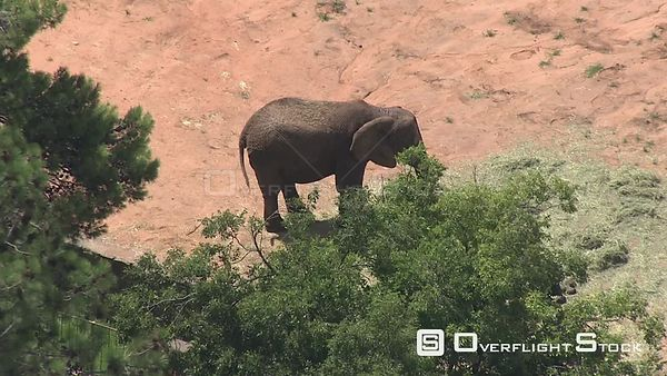 Aerial shot of an elephant at the Bloemfontein Zoo Bloemfontein Free State South Africa