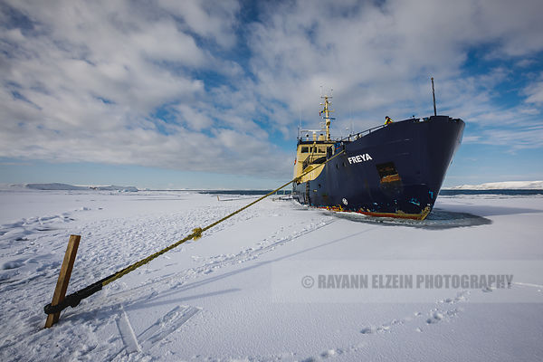Expedition ship MS Freya in the pack ice in Svalbard