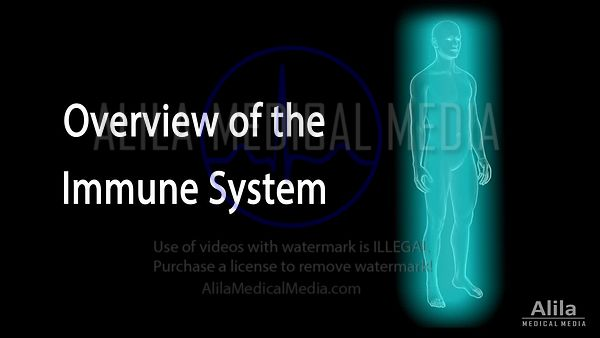 Overview of the immune system NARRATED animation.