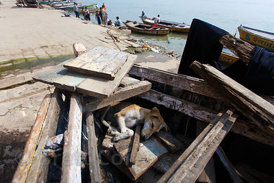 A street dog sleeps in a dilapidated wooden boat, Chousatti Ghat, Varanasi, India