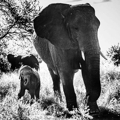 07616-Baby_elephant_and_mother_side_by_side_Tanzania_2018_Laurent_Baheux