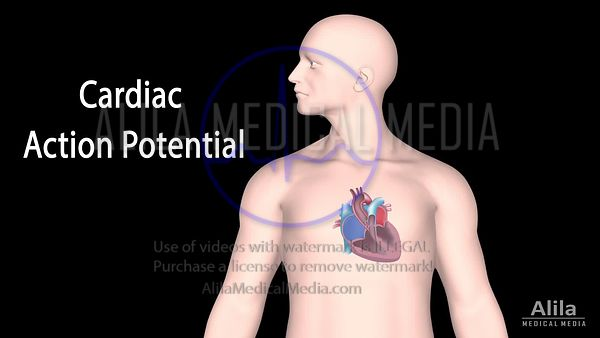 Cardiac action potential NARRATED animation part 1 - Pacemaker cells
