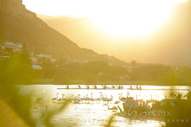 People kayaking past flamingoes at Zandvlei