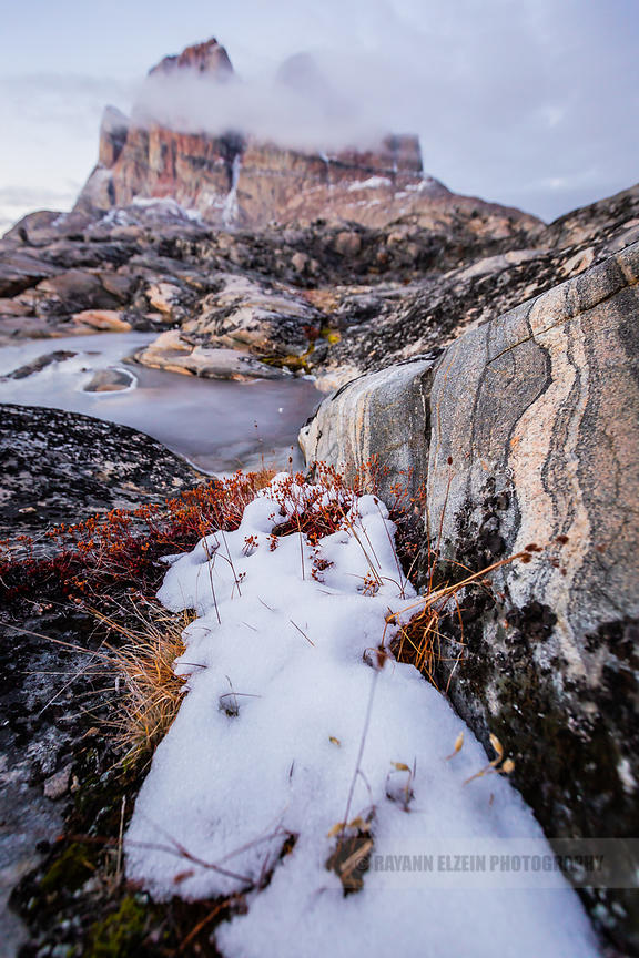 Last autumn vegetation and first snow in Uummannaq, Greenland