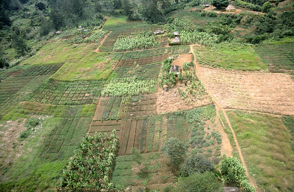 Aerial view of swidden landscape - the slash and burning of an area for temporary cultivation of crops (deforestation of orig...