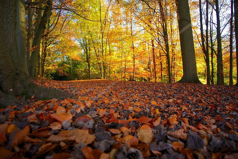 Low Angle Shot of Autumn Leaves with Sunlit Trees in the Background