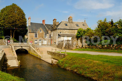FRANCE, MANCHE, GENETS//France, Normandy, Manche, Genets