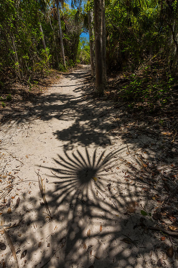 Palmetto Shadows in Bahia Honda State Park