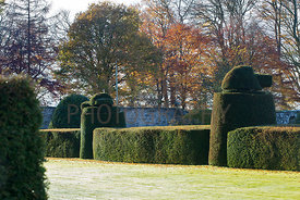 Yew topiary and hedges