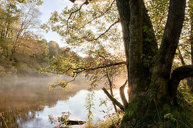 Misty stream in autumnal morning