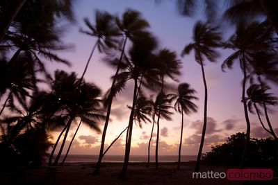 Palm silhouette at sunrise in the Caribbean