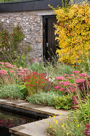 Planting by mirror pool including Sedum, Helenium, Verbena bonariensis and climbing Hydrangea
