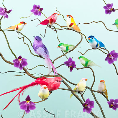 Oriental birds and Orchids